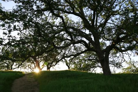 Sunrise throgh trees